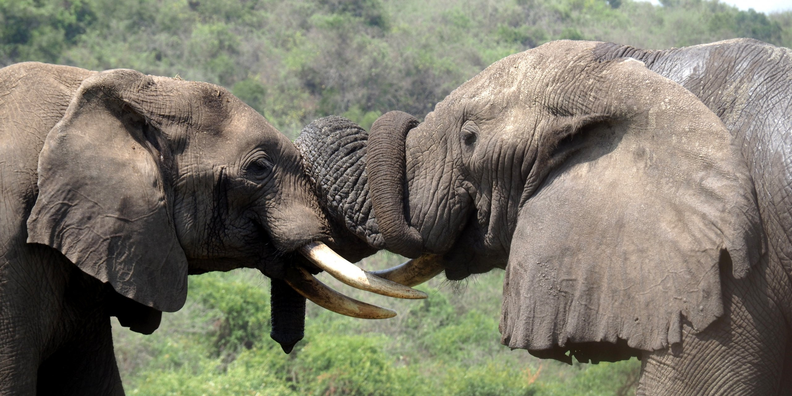 Our Most Memorable Wildlife Moments in Africa